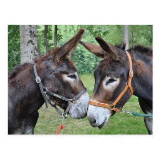 Zwei freundliche Esel Postkarte
