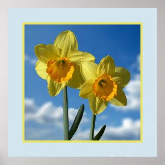 Zwei gelbe Narzissen 2,2 Poster