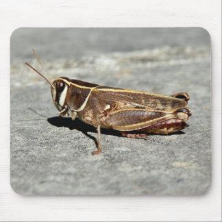 Zwei-Gestreifte Heuschrecken-Mäusematte Mousepad