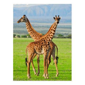 Zwei Giraffen Postkarte