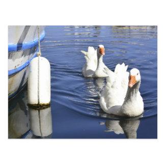 Zwei gooses in einem See in Agyos Nikolaos, Kreta Postkarte
