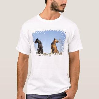 Zwei junge Hunde, die in den entgegengesetzten T-Shirt