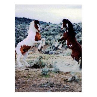 Zwei junges Pferdespielen Postkarte
