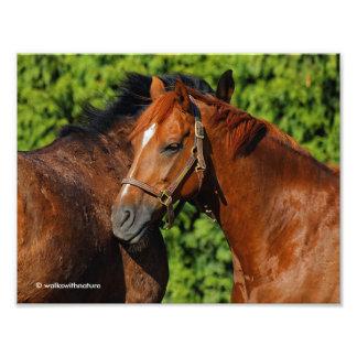 Zwei Kastanien-Pferde: Mageres auf mir Photographie