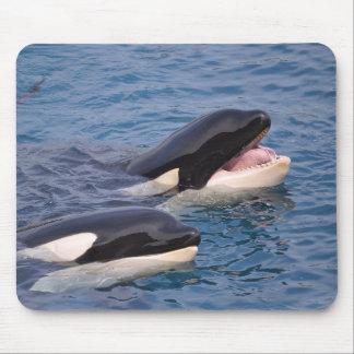 Zwei Killerwale Mousepad