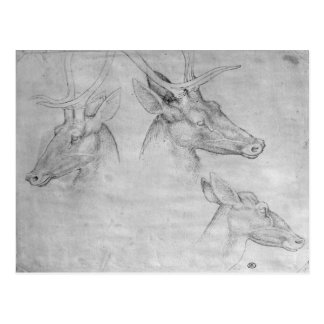 Zwei Köpfe der Hirsche, ein Kopf einer Postkarte
