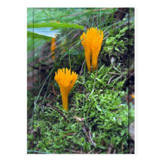 Zwei Leuchtorange-Gelb-wilde Pilze auf Moos Co Postkarte