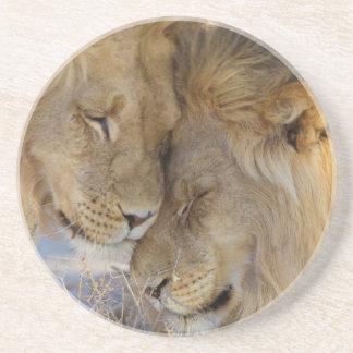 Zwei Löwen, die sich reiben Untersetzer