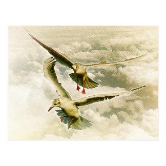 Zwei Möven Postkarte