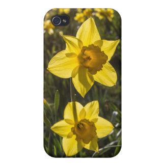 Zwei Narzissen-Blumen iPhone 4 Etui