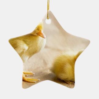 Zwei neugeborene gelbe Entlein auf hölzernem Boden Keramik Stern-Ornament