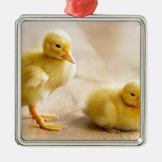 Zwei neugeborene gelbe Entlein auf hölzernem Boden Quadratisches Silberfarbenes Ornament