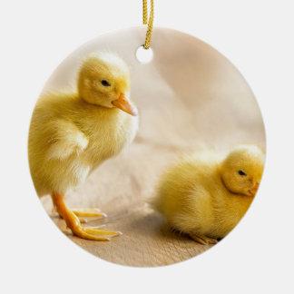 Zwei neugeborene gelbe Entlein auf hölzernem Boden Rundes Keramik Ornament