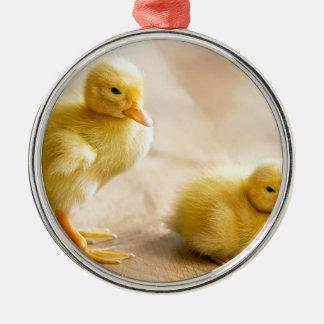 Zwei neugeborene gelbe Entlein auf hölzernem Boden Rundes Silberfarbenes Ornament