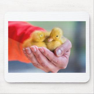 Zwei neugeborene gelbe Entlein, die an Hand sitzen Mousepad