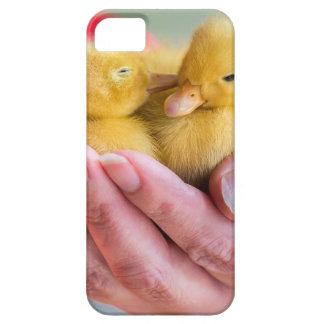 Zwei neugeborene gelbe Entlein, die an Hand sitzen Schutzhülle Fürs iPhone 5