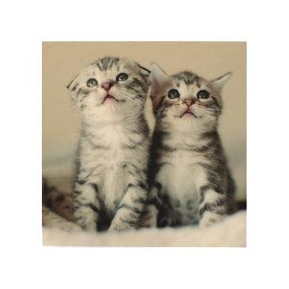 Zwei niedliche Kätzchen Holzdruck