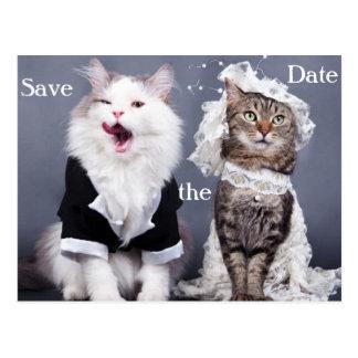 zwei niedliche Katzen Postkarte