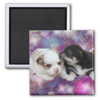 Zwei niedliche Welpen (Hunde) Quadratischer Magnet