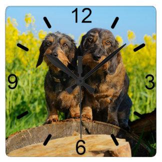 Zwei niedliches Dackel-HundDackel Quadratische Wanduhr