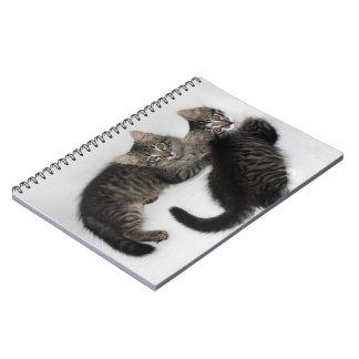 Zwei niedliches Kätzchen-Notizbuch Spiral Notizblock