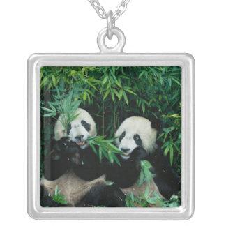Zwei Pandas, die zusammen Bambus, Wolong, 2 essen Versilberte Kette