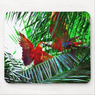 Zwei Papageien-Vögel, die in den Tropen spielen Mousepad