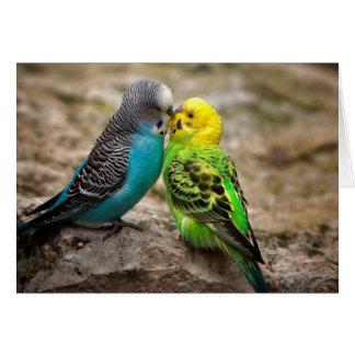 Zwei Parakeets Karte