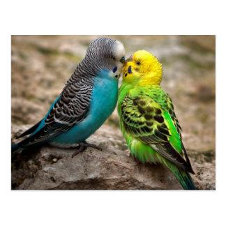 Zwei Parakeets Postkarte