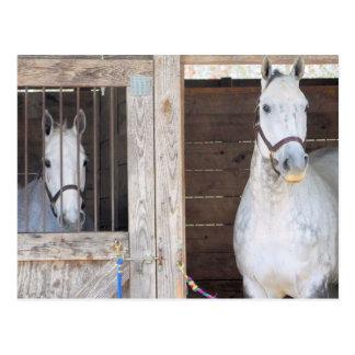Zwei Pferde an den Ställen Postkarten