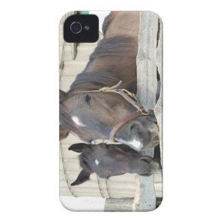 Zwei Pferde Chewin ein Zaun iPhone 4 Hüllen