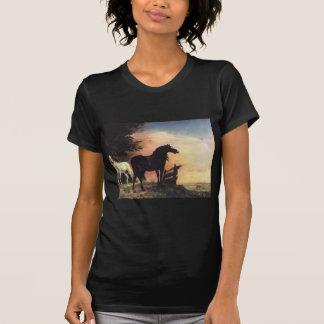 Zwei Pferde in einer Wiese nahe einem Tor T-Shirt