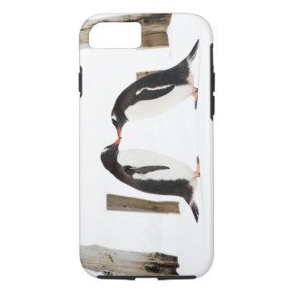 Zwei Pinguine, die iPhone 7 starken Fall küssen iPhone 8/7 Hülle
