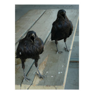 Zwei Raben, die auf einer Bank außerhalb des Poster