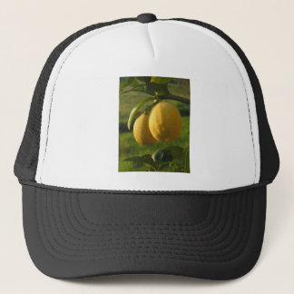 Zwei reife Zitronen, die am Baum hängen Truckerkappe
