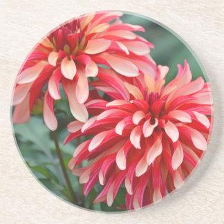 Zwei rosa Dahlie-Blumen Getränkeuntersetzer