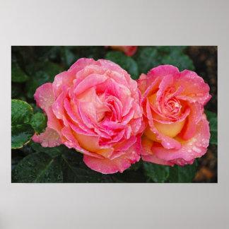 Zwei rosa Rosen bedeckt mit Poster