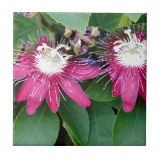 Zwei rote Leidenschafts-Blumen-Nahaufnahme draußen Fliese