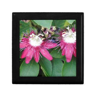 Zwei rote Leidenschafts-Blumen-Nahaufnahme draußen Geschenkbox