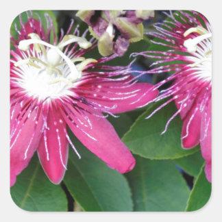 Zwei rote Leidenschafts-Blumen-Nahaufnahme draußen Quadratischer Aufkleber