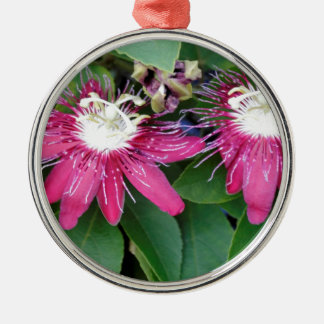 Zwei rote Leidenschafts-Blumen-Nahaufnahme draußen Rundes Silberfarbenes Ornament