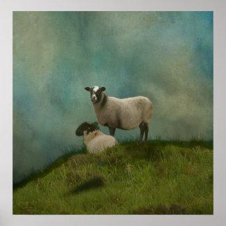 zwei Schafe auf dem Gebiet Poster