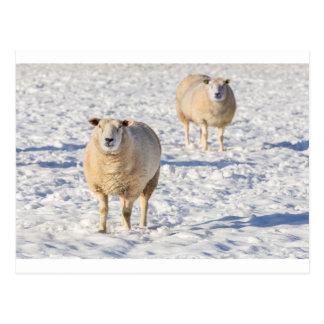 Zwei Schafe stehend im Schnee während des Winters Postkarte