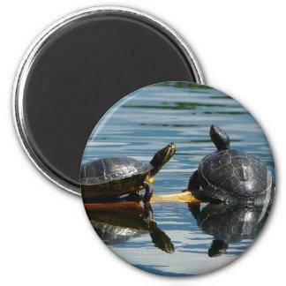 Zwei Schildkröten am Schildkröte-Bar Runder Magnet 5,7 Cm
