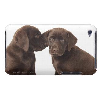Zwei Schokolade Labrador retriever-Welpen iPod Touch Etuis