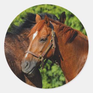 Zwei schöne Kastanien-Pferde im Sun Runder Aufkleber