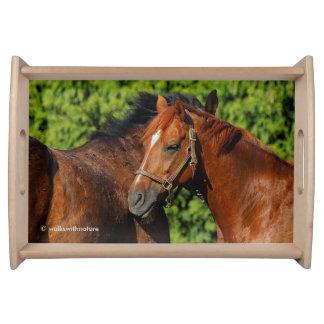 Zwei schöne Kastanien-Pferde im Sun Tablett