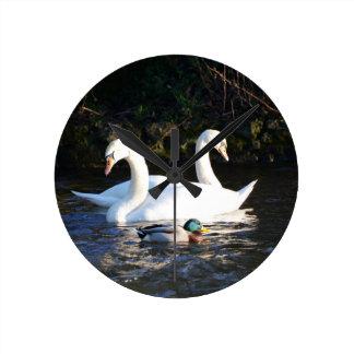 Zwei Schwäne und eine Ente Runde Wanduhr