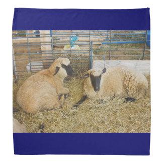 Zwei schwarze gegenübergestellte Schafe in einer Halstuch