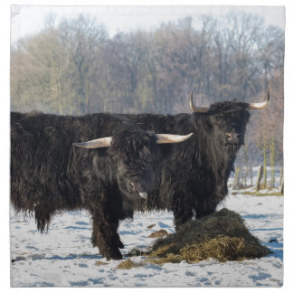 Zwei schwarze schottische Hochländer im Stoffserviette